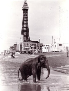 An elephant enjoying a bath on the beach. Credit: Local and Family History Centre, Blackpool Central Library